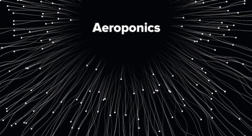 Revolutionizing Cannabis Production With Aeroponics
