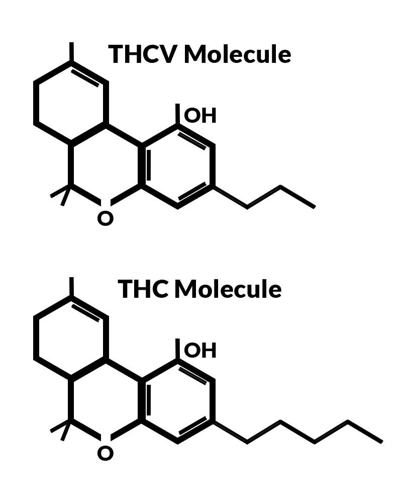 Diagram of TCHV Molecule and THC Molecule