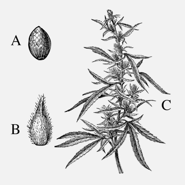 The Medical Cannabis Terpenes Guide
