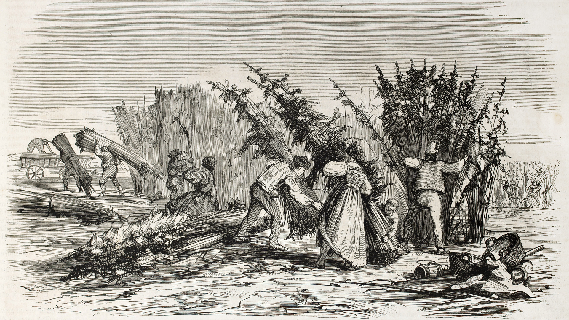 wood cut depicting cannabis harvest