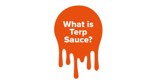 What Is Terp Sauce and How Is It Made?