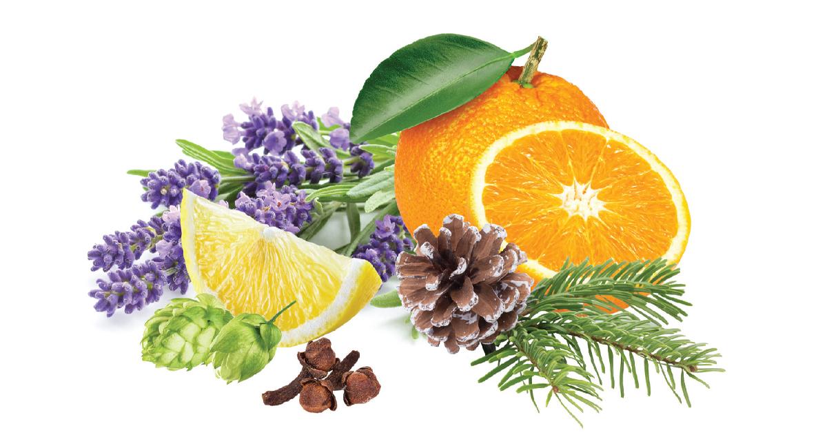 Terpenes linalool limonene myrcene and pinene