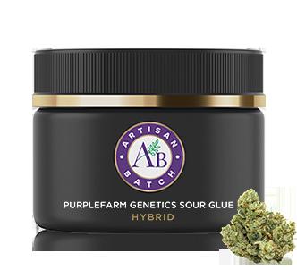 Purplefarm Genetics Sour Glue