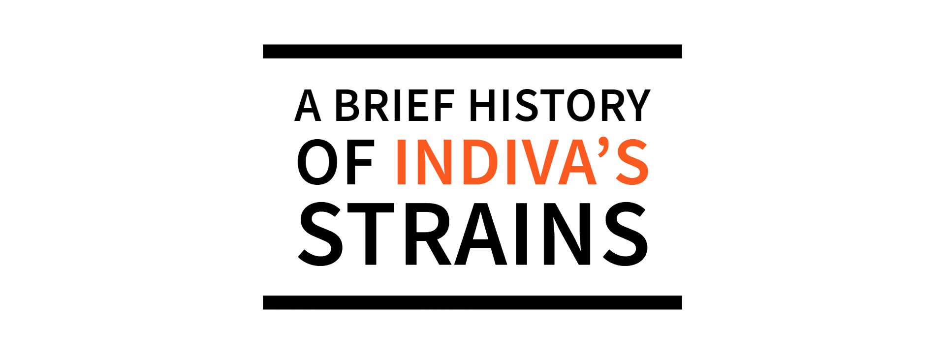 A Brief History of Indiva's Classic Cannabis Strains